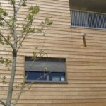 Siberian Larch Timber Focus