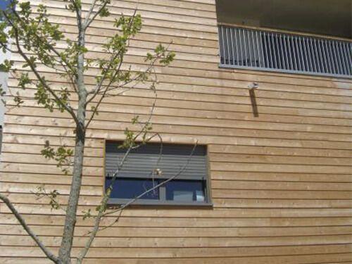 Siberian Larch Timber Focus